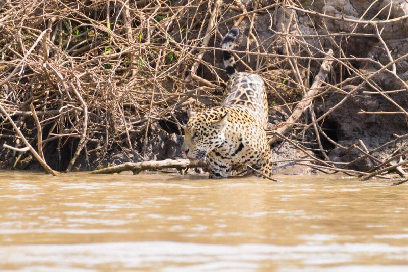 Pantanal brasileiro: 4 motivos para vivenciar essa experiência